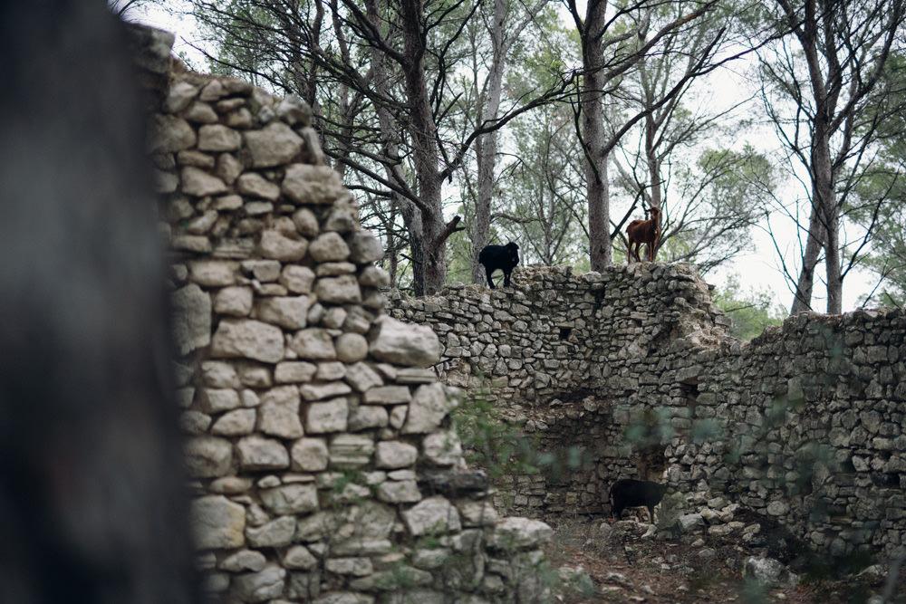Le parfait décor pour une séance engagement en forêt : une ancienne bergerie avec des chèvres !