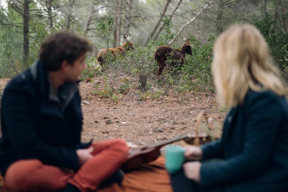 Les chèvres nous tiennent compagnie pendant la séance engagement en forêt