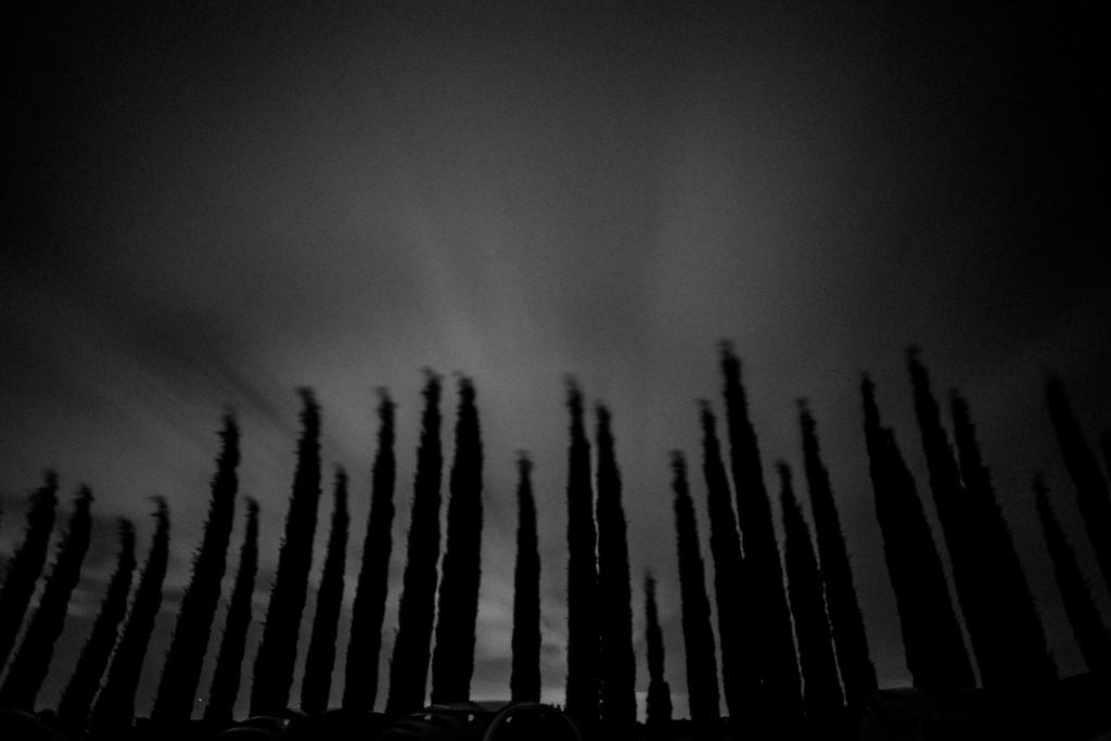 Une rangée d'ifs dans les derniers rayons du couchant dans la Drôme Provençale