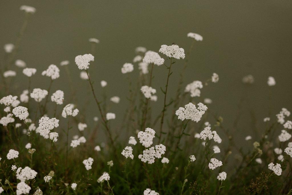 Au bord de l'étang sur le domaine familiale dans l'Oise