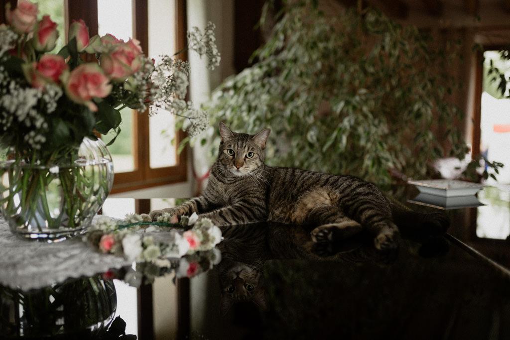 Le chat des parents de M sur le piano de leur maison de famille